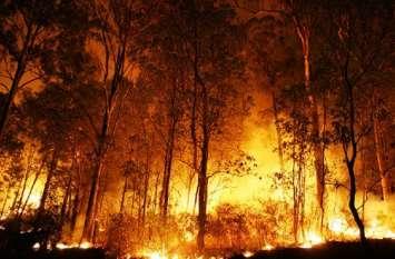 VIDEO: धधक रही है देवभूमि उत्तराखंड, करोड़ों की वन संपदा स्वाहा