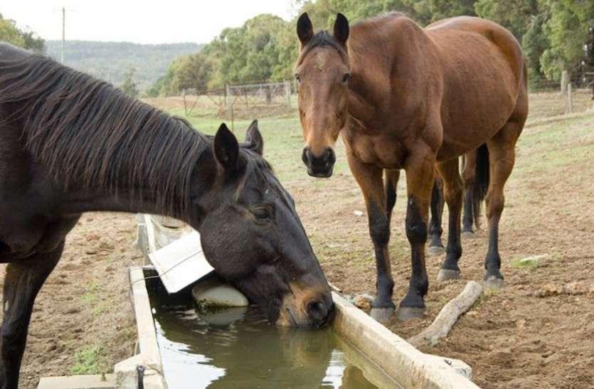 जानिए बरेली में दो घोड़ों को क्यों दी गई सजा ए मौत