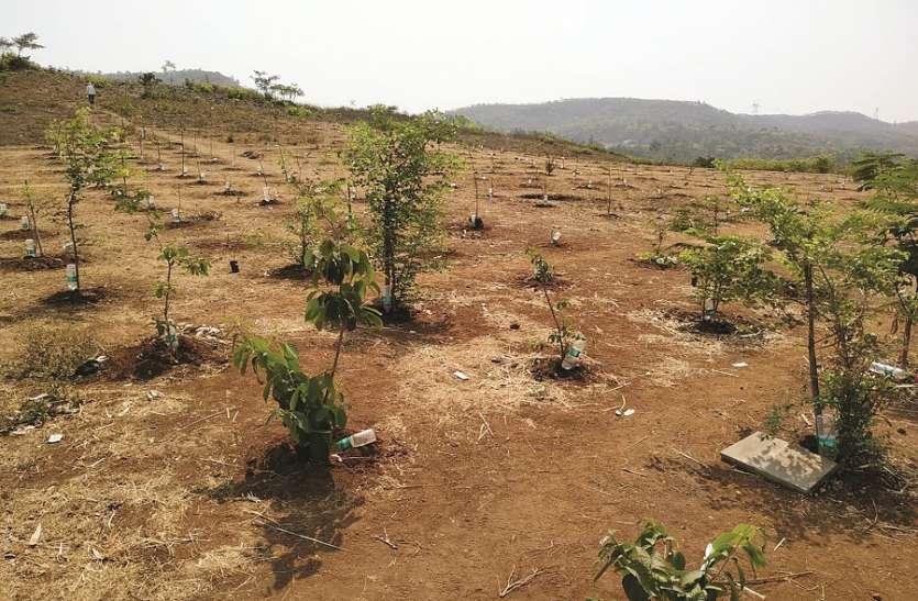 प्रशासनिक लापरवाही के कारण मानसून में रोपे 58 हजार पौधे नष्ट