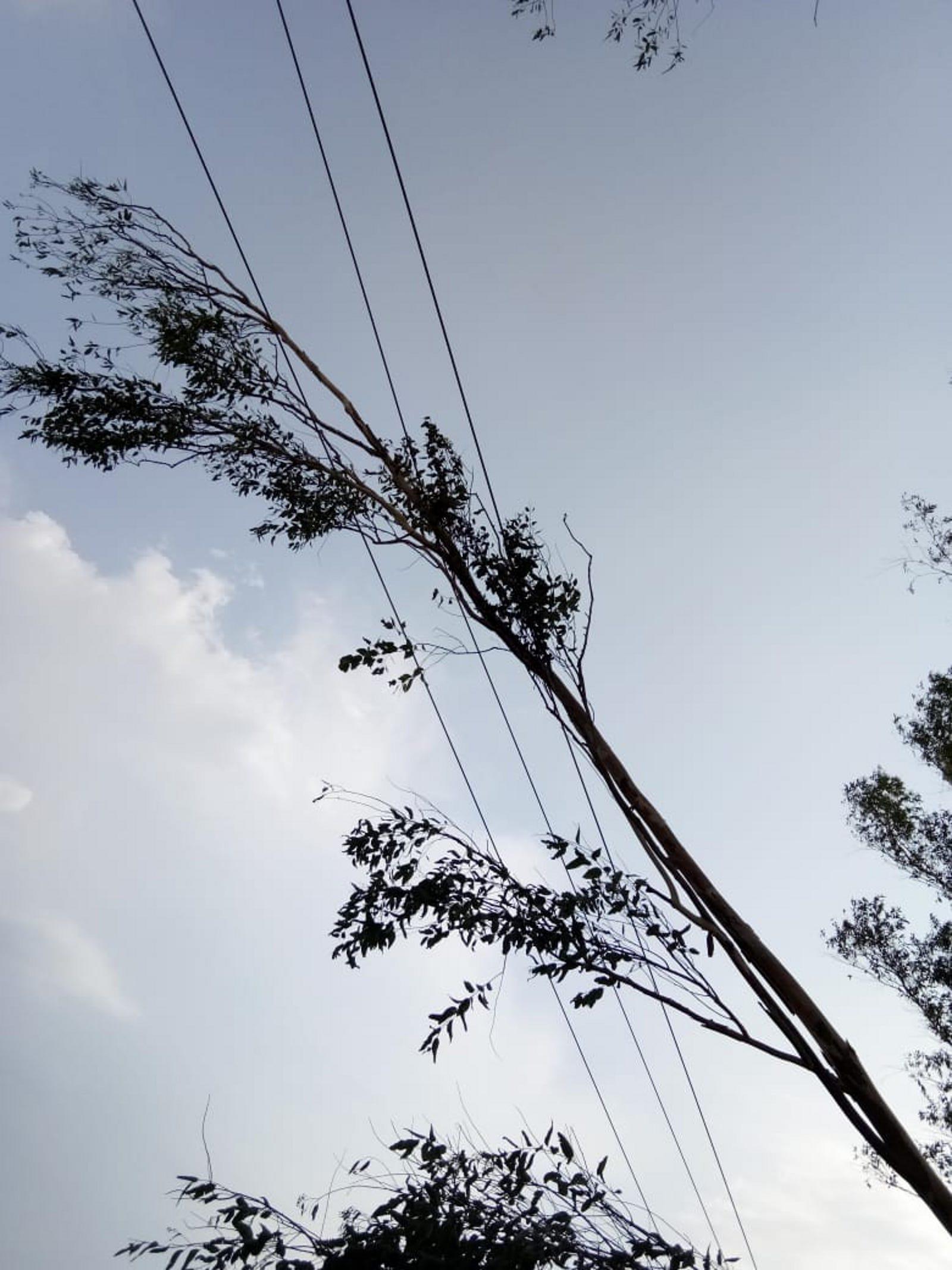 पेड़ काटकर हाइटेंशन लाइन पर गिराया, दो घंटे बंद रही बिजली सप्लाई, शिकायत दर्ज