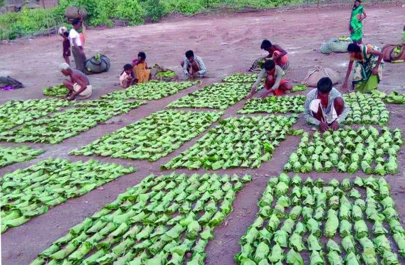 वन समितियों में तेन्दूपत्ता तुड़ाई का कार्य जोरों पर