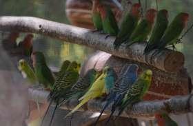 Good News : उदयपुर के गुलाबबाग में जल्द गूंजेगी पक्षियों की चहचहाहट, देखें  video