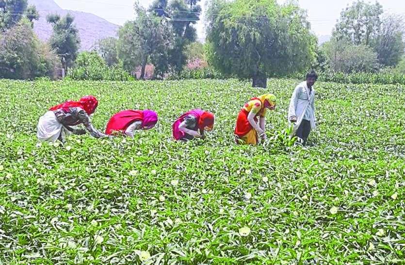 किसानों के खेत की मिट्टी की सेहत से खिलवाड़ कर रहे ये अधिकारी, परीक्षण केन्द्र नहीं हुए चालू