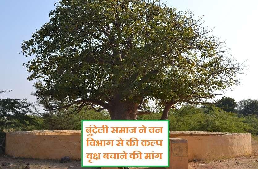 बुंदेली समाज ने वन विभाग से की कल्प वृक्ष बचाने की मांग, वैज्ञानिक व समाजसेवी पहुंचे सिचौरा गांव