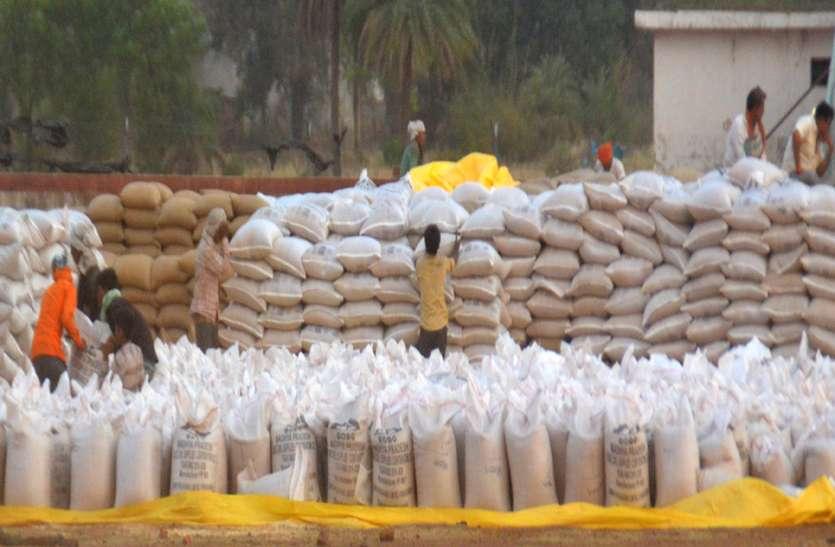जिलेभर में बिका 7.57 लाख क्विंटल गेहूं, जिसमें 46 फीसदी से अधिक मुंगावली के केंद्रों ने खरीदा