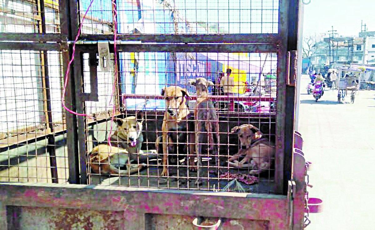 कुत्तों का आतंक, 12 दिनों में लग गए 150 इंजेक्शन