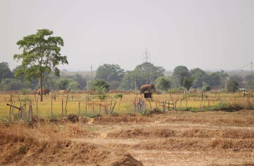 गांव में घुसे दो दंतैल हाथी ने जमकर उत्पात, वन विभाग की टीम ने लोगों को दी चेतावनी