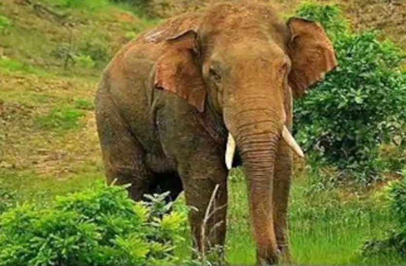 कलेक्ट्रेट कार्यालय के पीछे जब सुबह आ धमके दो हाथी, फिर...