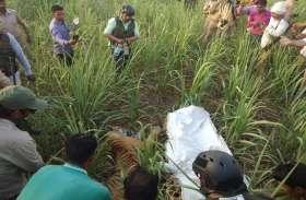 लखनऊ चिड़ियाघर भेजी गई पीलीभीत में पकड़ी गई बाघिन