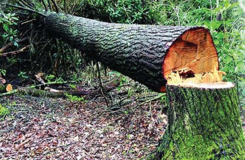 सड़क चौड़ीकरण के लिए दे दी गयी 5 हजार पेड़ों की बलि, बदले में एक भी नहीं लगाए