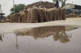 एफसीआई के अधिकारियों ने किया निरीक्षण, मण्डी में 60 हजार कट्टे बरसात से भीगे
