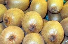 ये दुनिया का ऐसा खास फल, जिसको खाते ही तुरंत बढ़ती है प्लेटलेट्स, डेंगू बुखार के लिए है रामबाण