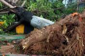 चक्रवात फानी का दंश झेल चुके ओडिशा में 'मिशन ग्रीन' को सफल बनाने की चुनौती, 24 लाख पेड़ लगाएगी सरकार