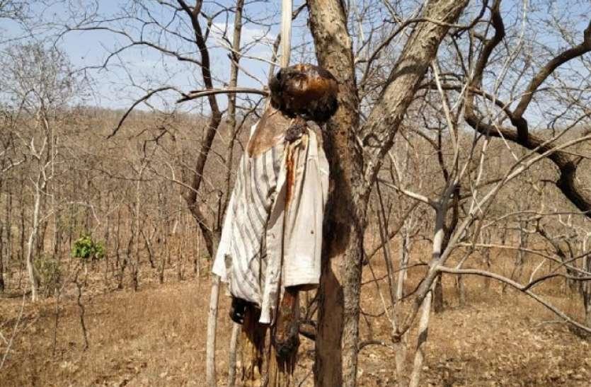 जंगल में पेड़ से लटका मिला वृद्ध का शव