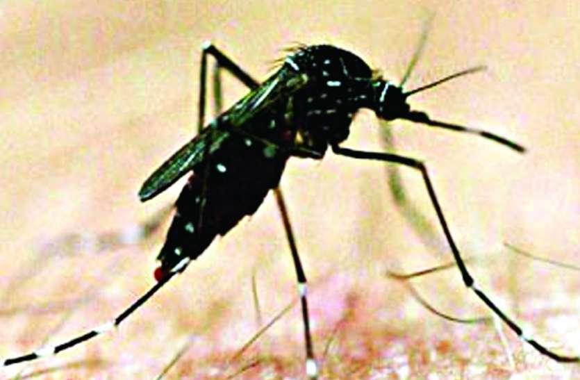 डेंगू से करना है बचाव तो इन तरीकों को अपनाएं