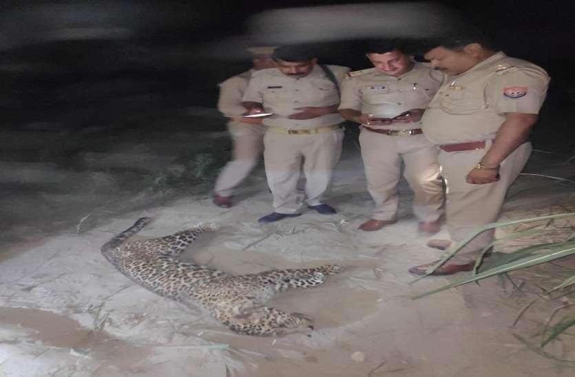 वन विभाग बैठा रहा खामोश, ग्रामीणों ने मार डाला तेंदुआ