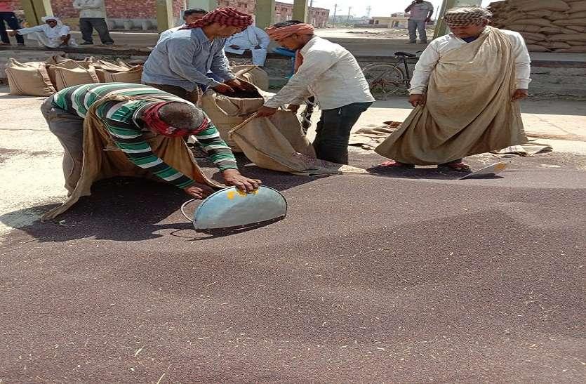 Bharatpur News  सरसों की दो लाख क्विंटल खरीद ने चौंकाया...