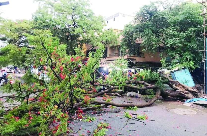 बेंगलूरु में बारिश का त्राहिमाम, कहीं पेड़ गिरे तो कहीं कार का निकला कचूमर
