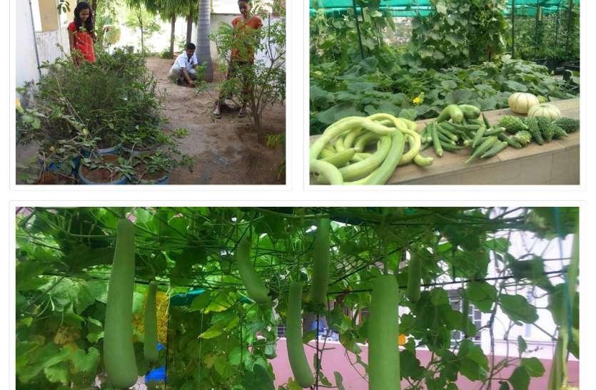 World Plant A Vegetable Garden Day: किचन गार्डन बनाकर घर में लगा रहे सब्जियां, देखें वीडियो