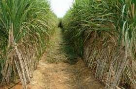 यहां झूठा साबित हुआ सरकार का दावा, 74 किसानों को नहीं मिला गन्ना बकाया