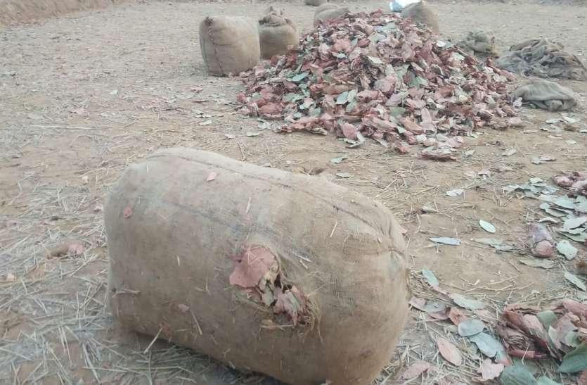 VIDEO- रात भर तेंदुपत्ता के बोरे को हाथियों ने फुटबाल की तरह खेला, नुकसान से बचने डीएफओ ने सुबह किया ये काम...