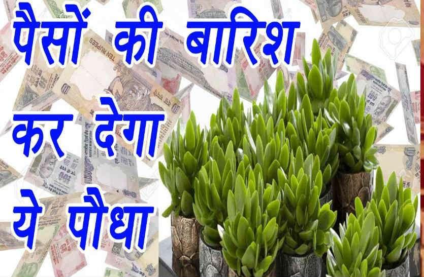ये है पैसे बरसाने वाला पौधा, घर के मेन गेट पर लगाएं तो करोड़पति बनते देर नहीं लगती