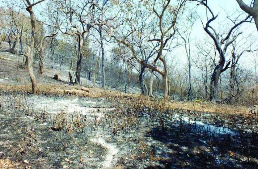 मानसून में लौटेगी आग से उजाड़ हुए वन क्षेत्र की हरियाली