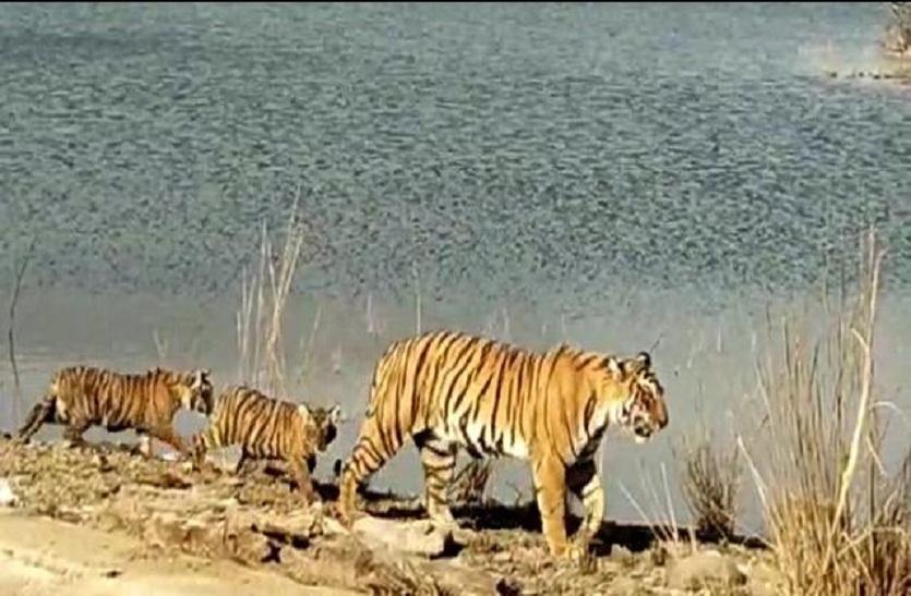 रणथम्भौर राष्ट्रीय उद्यान में चौथे चरण की वन्यजीव गणना शुरू ,रणथम्भौर में बाघ व अन्य वन्यजीवों की संख्या के आंकड़े