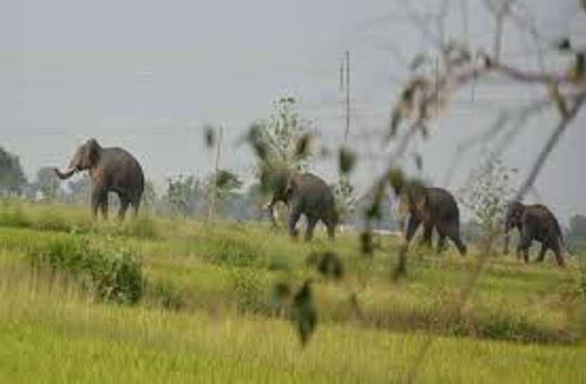 हाथियों के दल ने जमकर मचाया उत्पात, रोज फसलों को पहुंचा रहे नुकसान