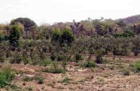 बागवानों के रहते जमीन बंजर, वैष्णवों के गोद लेते ही हुई उपजाऊ