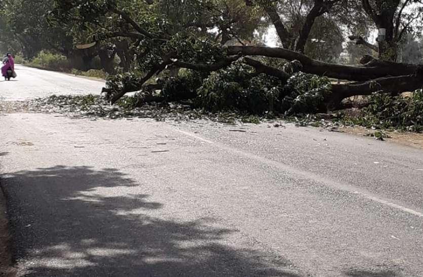 खबर के बाद भी नही चेता प्रशासन आखिर साईंखेड़ा रोड पर गिरा आम का पेड़ देर तक लगा जाम