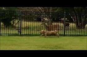 कैमरे में कैद हुई डॉग और हिरन की अनोखी दोस्ती, देखें वीडियो