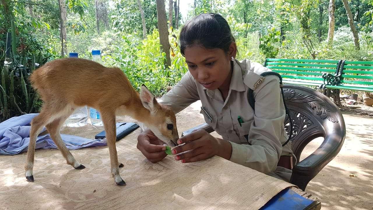 पुचपुच को जल्द कानन पेंडारी भेजेगा वन विभाग, बकरी का दूध पिलाकर बचाई जान, किया गया नामकरण
