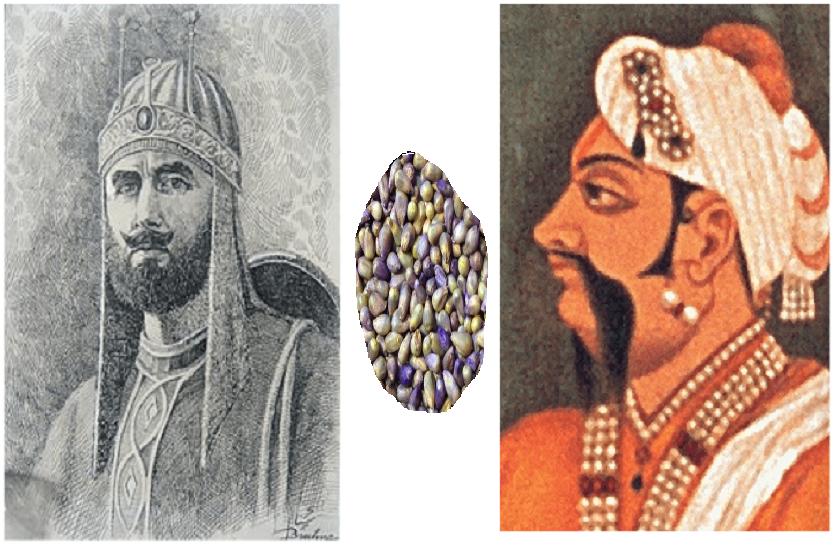 मुट्ठी भर बाजरे के चक्कर में शेर शाह सूरी के हाथ से नकलने वाली थी दिल्ली की गद्दी, जानें यह दिलचस्प दास्तां