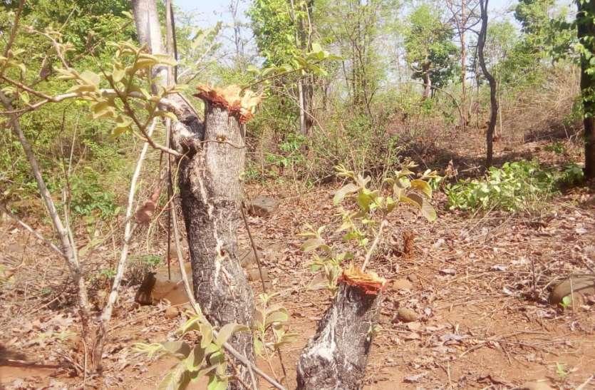 धड़ल्ले से अवैध कटान से उजड़ रहे हरे-भरे जंगल