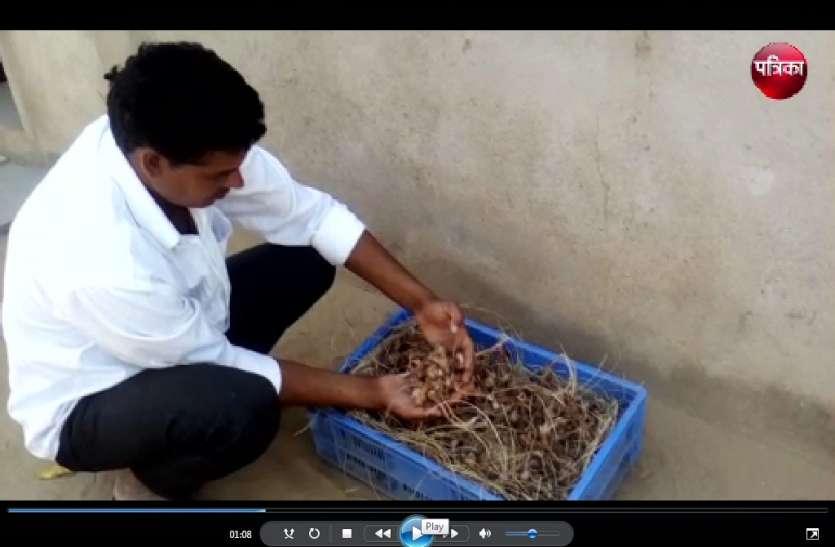 इस किसान ने किया श्रीनगर के केसर का उत्पादन