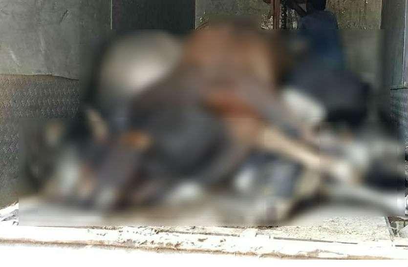 सरकारी गौशाला में सांड़ों की मौत, RSS नेता ने मिला दिया उपमुख्यमंत्री को फोन और फिर...
