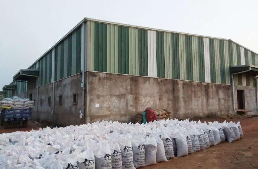 गरीबों के निवाले पर बेपरवाही की घुन: एमपी के इस जिले में 15 हजार क्विंटल गेहूं पर लग गए कीड़े