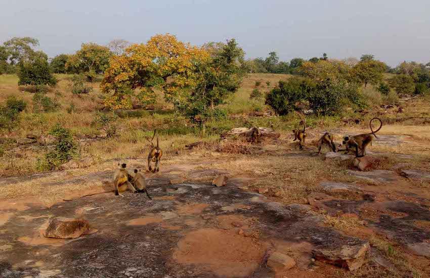देहरादून की टीम करेगी जानवरों की गिनती, अवैध कटाई, खनन पर भी फोकस
