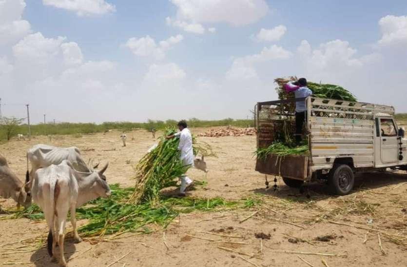 अकाल में दानदाताओं ने की पशुओं के लिए चारे की व्यवस्था