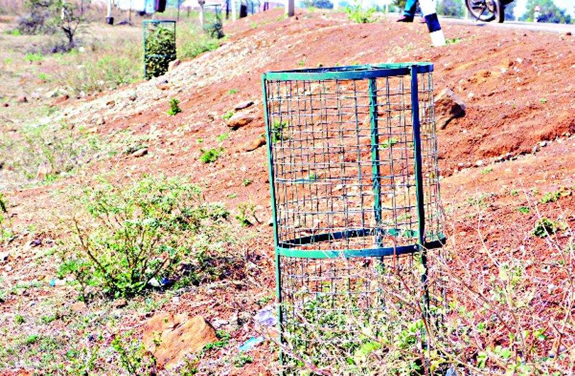 वन विभाग की अनदेखी से सूख गए लगाए गए हजारों पेड़