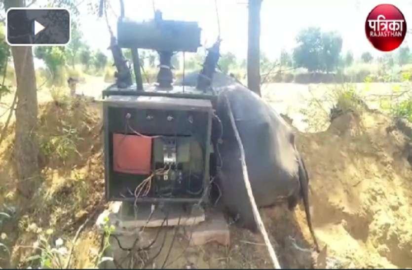 VIDEO : करंट लगने से भैंस की मौत, मौके पर पहुंचे विद्युत निगम