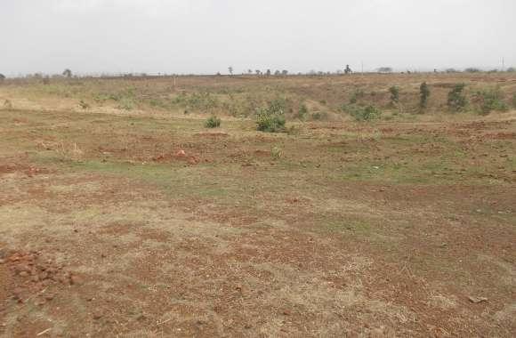 जहां होना चाहिए थे लाखों पेड़, वहां अब है सूखे मैदान