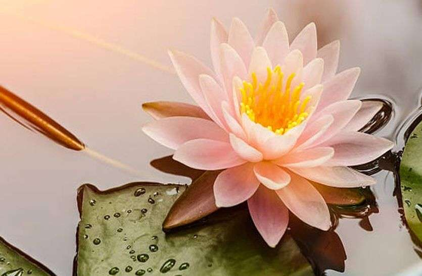 astrology facts Not only election but also gives success to lotus flower