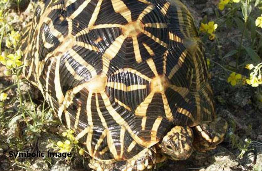 आदर्श क्रेडिट सोसायटी में गबन के आरोपी कछुए पालने के शौकीन, दुर्लभ प्रजाति के 21 कछुए बरामद