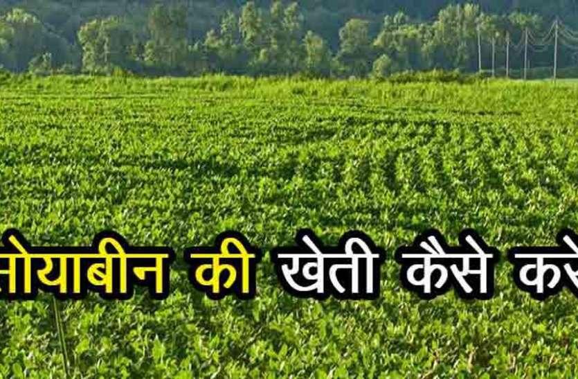 कृषि वैज्ञानिकों ने दी किसानों को सलाह, सोयाबीन फसल बुवाई से पहले करें गहरी जुताई, फिर खेत में डाले बीज