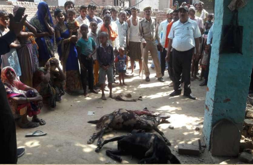 मकान की दीवार गिरने से एक महिला और दो बकरियों की मौत के बाद मच गया कोहराम, देखें वीडियो