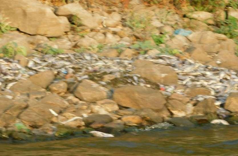 - सिलिसेढ़ में मर रही है मछलियां, कैसे आएंगे पर्यटक