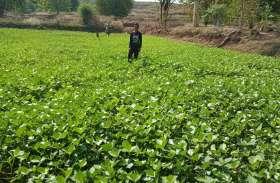 पानी ने बदली किसानों की किस्तम, जिंदगी में आया बड़ा बदलाव