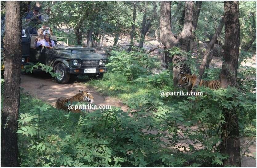 VIDEO : वन विभाग ने माना रणथम्भौर में विस्थापन की धीमी रफ्तार, विस्थापन कमेटी व वन अधिकारियों की जयपुर में हुई बैठक